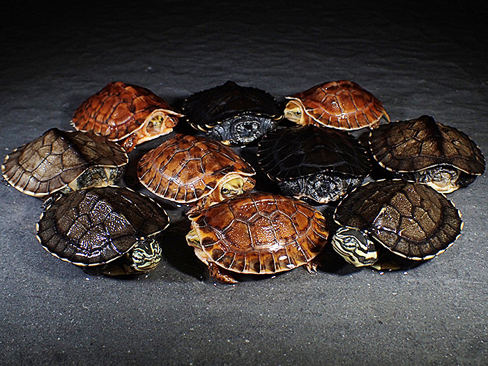 TURTLE、亀、カメ